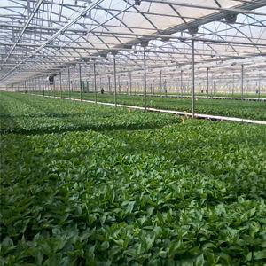 florka-aumentar-sus-cultivos